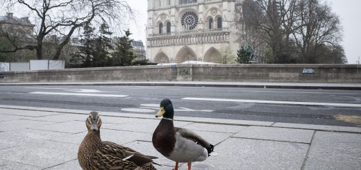 Ducks paris