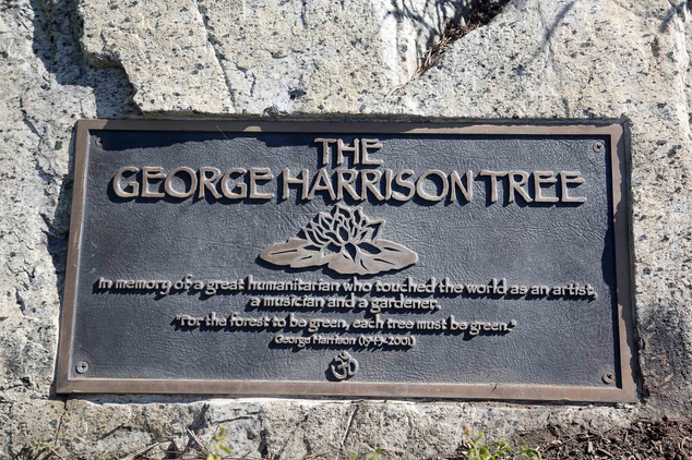 George Harrison Tree-Beetles
